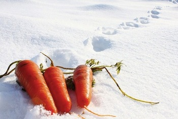 雪下にんじん.jpg